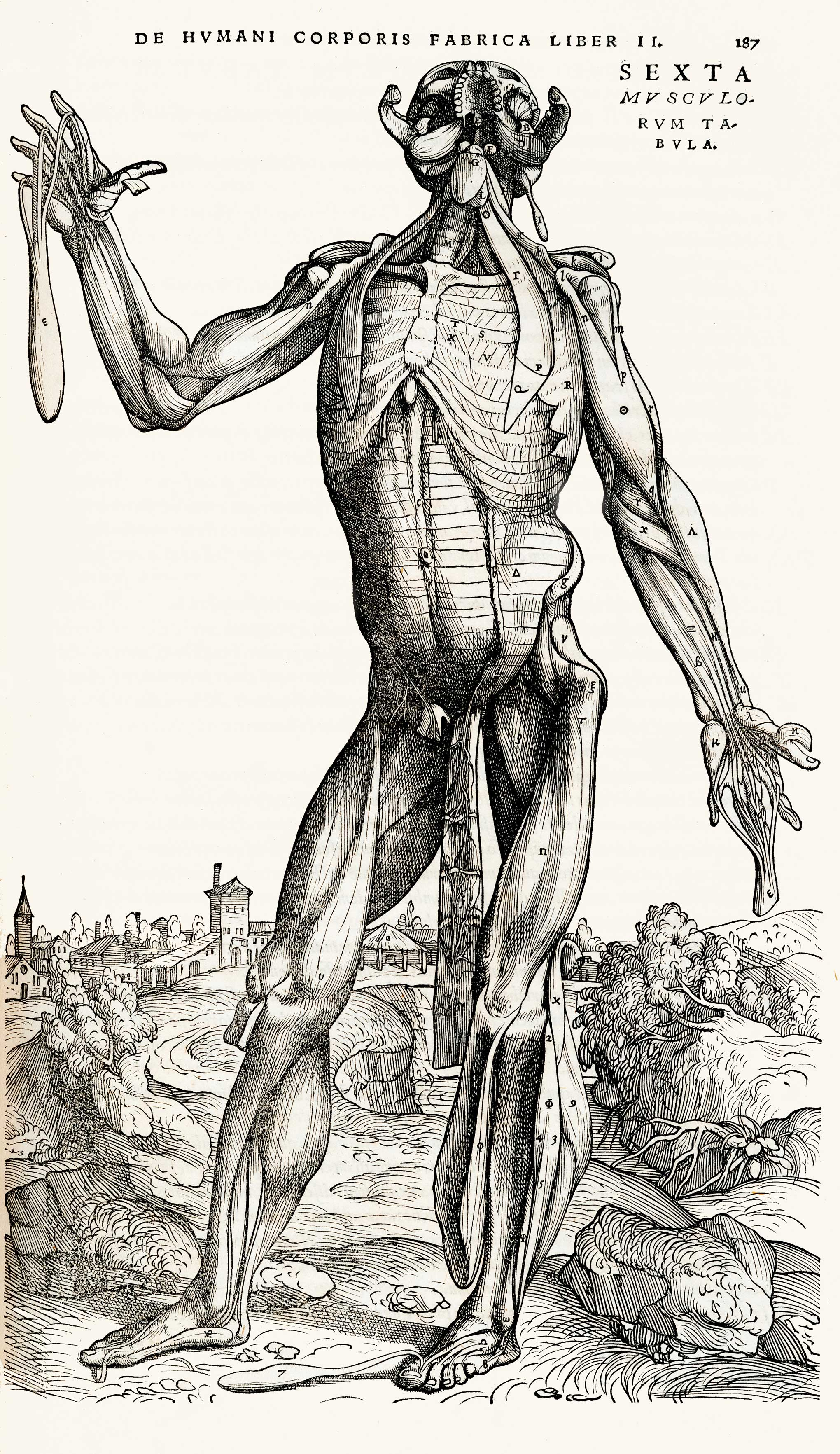 These Old Anatomical Drawings Are Worth Dissecting 1843