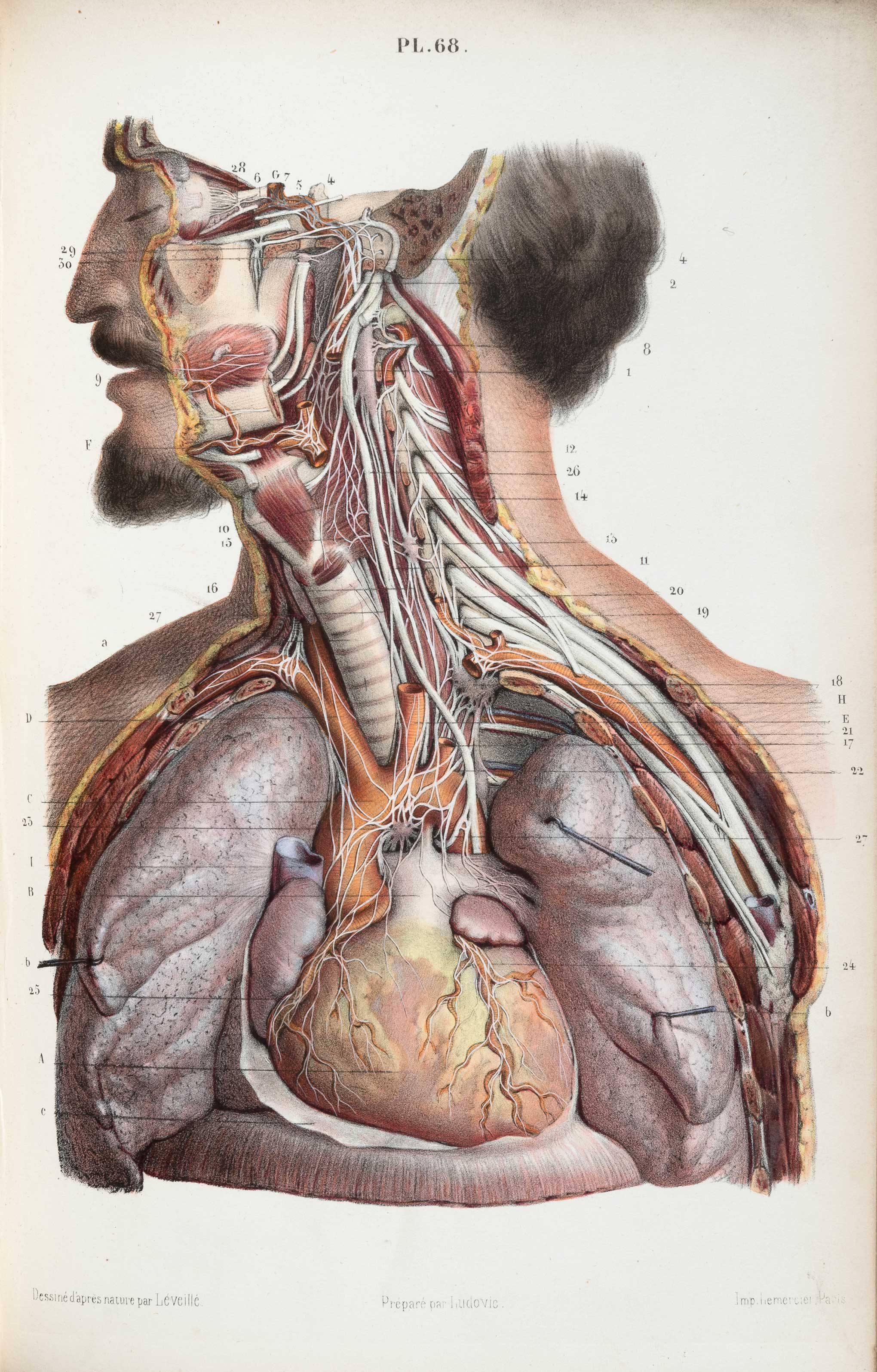 These old, anatomical drawings are worth dissecting | 1843