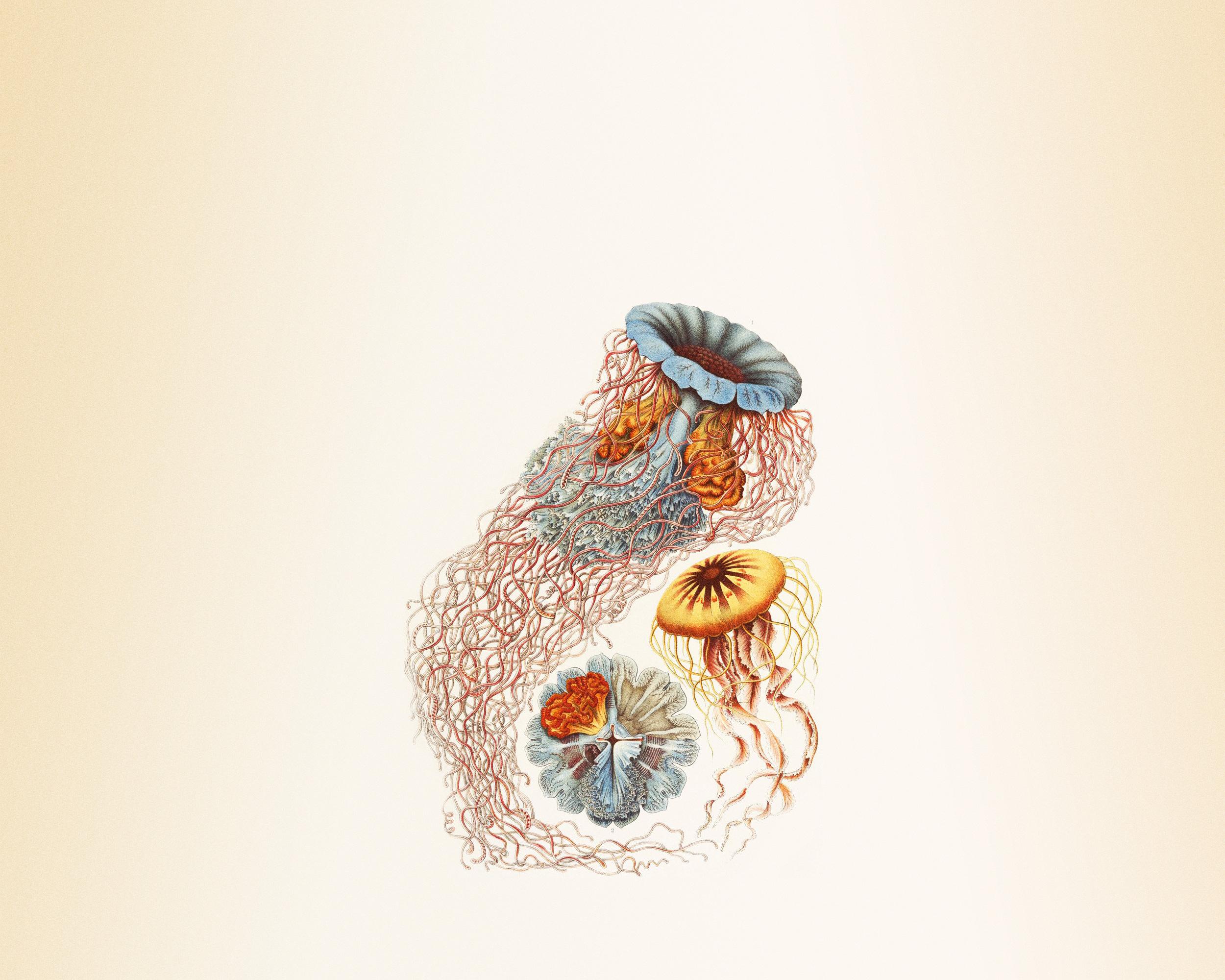 How Ernst Haeckel made plankton beautiful