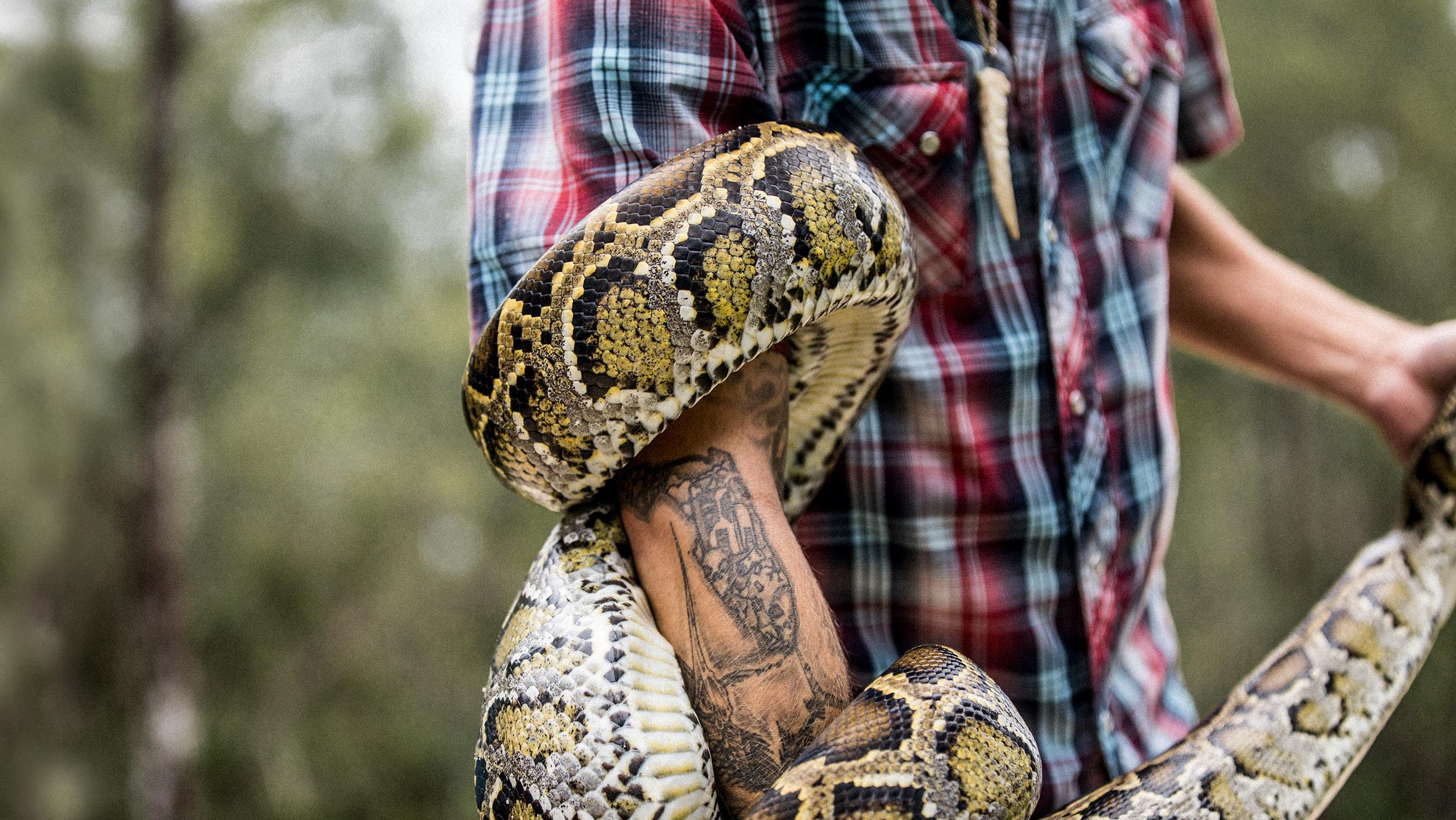 The men fighting Florida's python epidemic | 1843