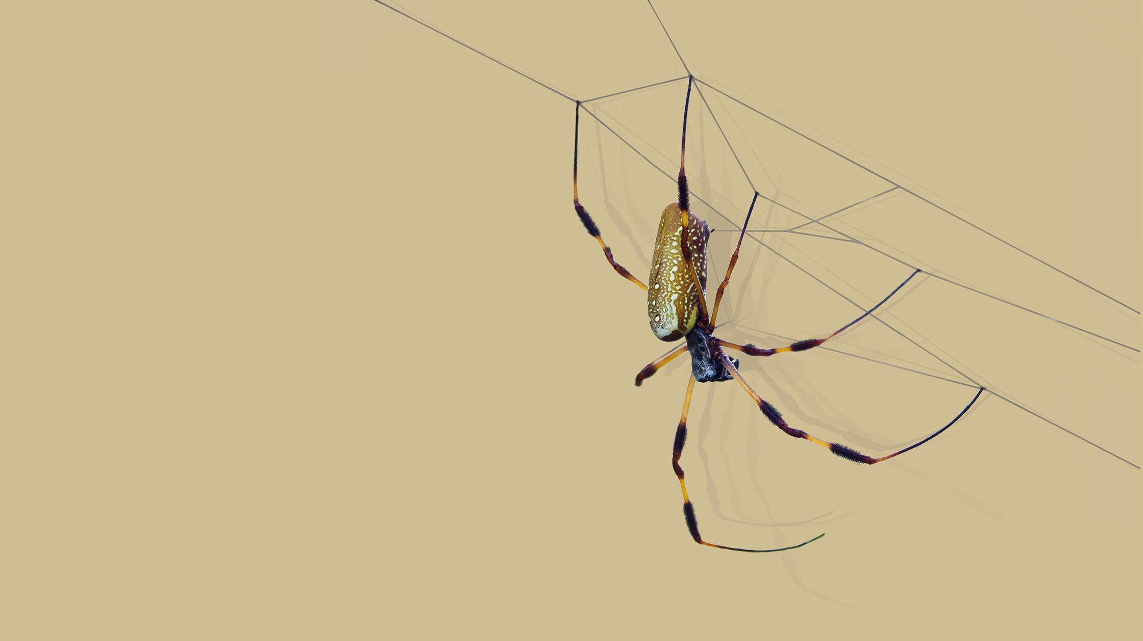 Why spider silk is nature's most elusive textile